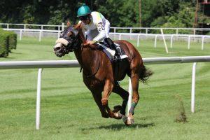horse racing 300x200 - horse-racing